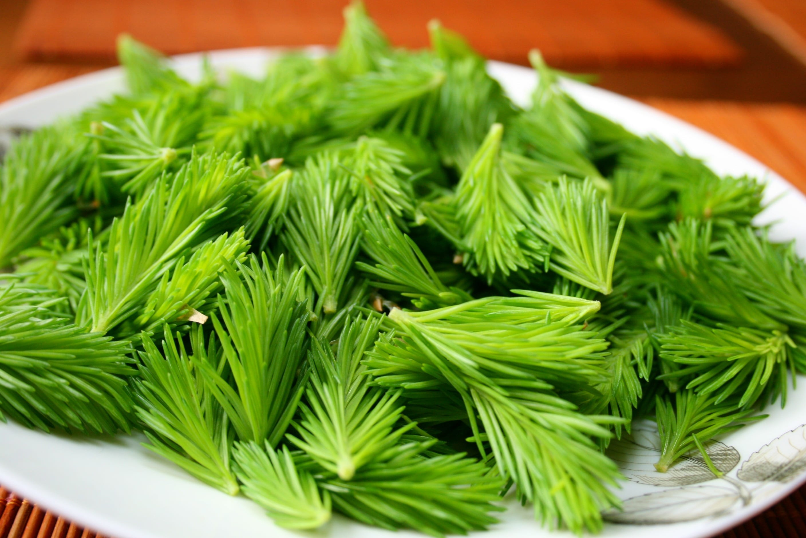 Spruce tips, fir shoots