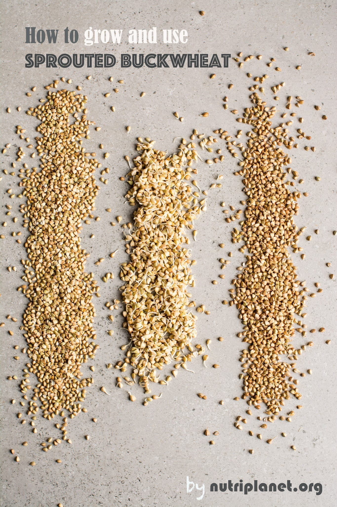 Sprouted Buckwheat aka How to Sprout Buckwheat