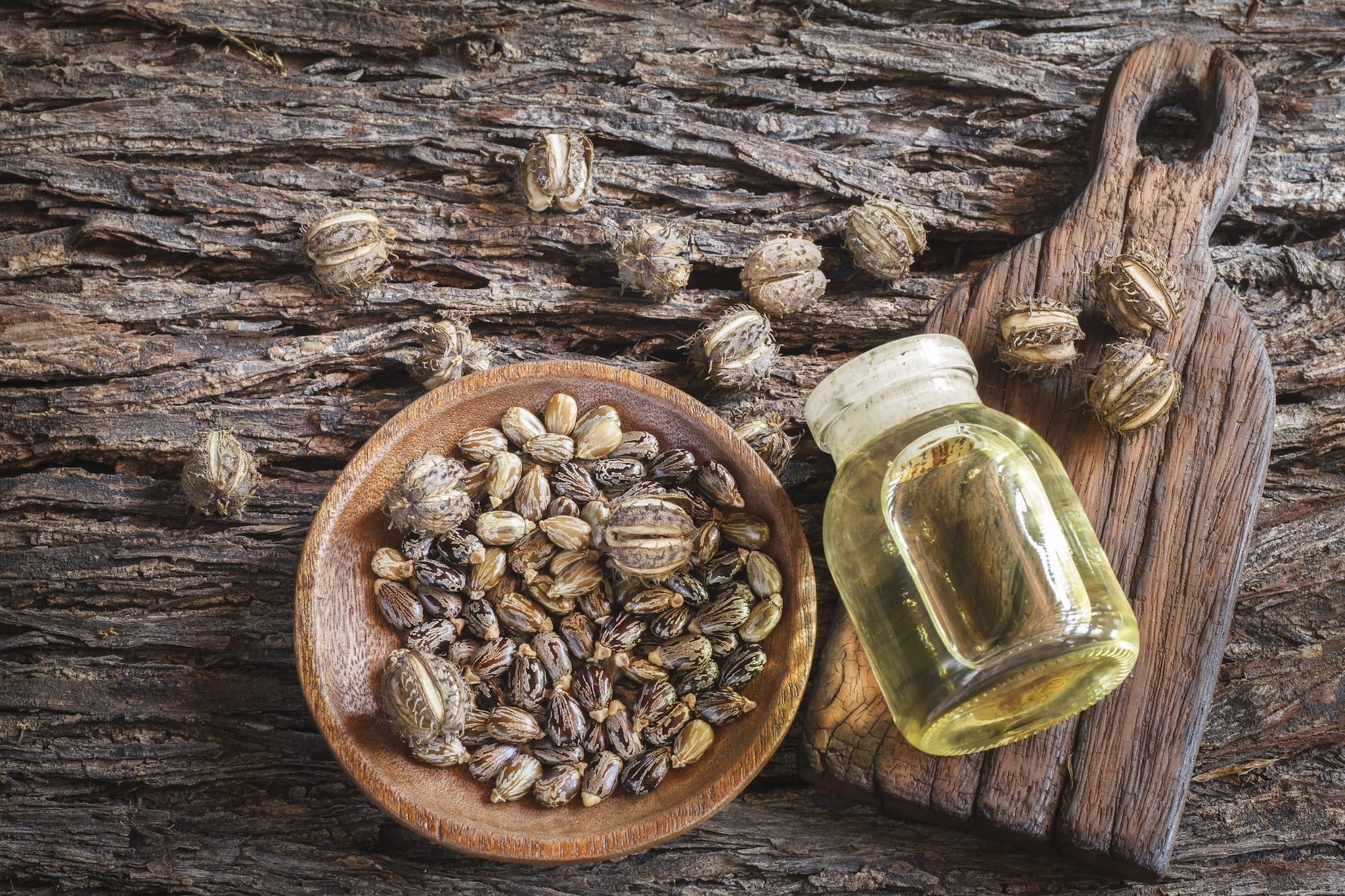 Image result for Sugar Castor Bean Oil